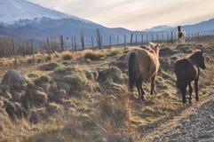 Лошади дерева в луге на заходе солнца Стоковое Фото