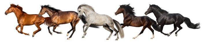 Лошади изолированные на белизне стоковая фотография