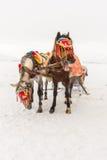 Лошади и ландшафт зимы стоковые фотографии rf