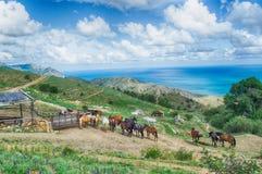 Лошади и конюшни в горах Стоковая Фотография