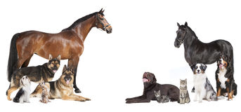 Лошади и коллаж собак стоковая фотография rf