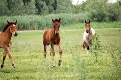 Лошади и ослята Стоковые Фотографии RF