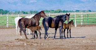 Лошади и ослята Стоковая Фотография RF
