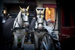 Лошади и экипаж на stefansplatz в вене Стоковые Фото