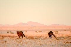 Лошади идя прочь в пустыню Стоковое Изображение