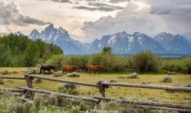 Лошади и Tetons стоковая фотография rf