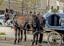 Лошади конца-вверх и экипаж Чарлстона Стоковые Фотографии RF