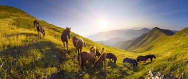 Лошади на верхней части горы Стоковое Изображение
