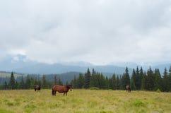 Лошади на выгоне в горах Стоковое Фото