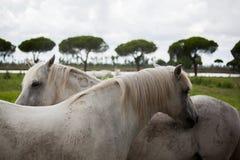 Лошади на выгоне Стоковое Изображение