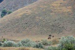 Лошади на выгоне стоковые изображения