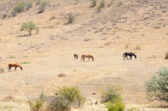 Лошади на горном склоне Стоковое Изображение RF