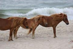 Лошади на пляже Стоковое фото RF