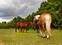 Лошади на ранчо Стоковая Фотография