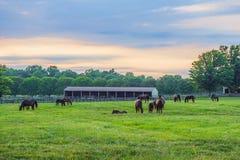 Лошади на сумерк Стоковое Изображение RF