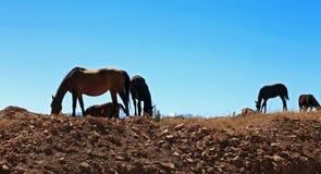 Лошади на луге Кавказа осени Стоковое Фото