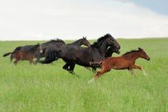 Лошади в лужке стоковое фото rf