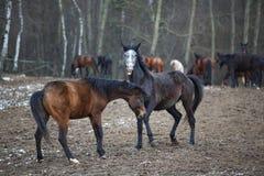 Лошади на лужке Стоковые Фото