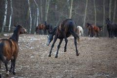 Лошади на лужке Стоковые Изображения