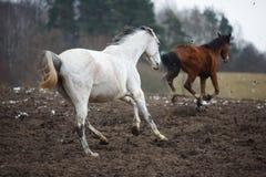 Лошади на лужке Стоковое Изображение RF