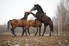 Лошади на лужке Стоковые Изображения RF