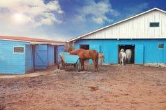 Лошади на ферме в сарае на солнечном после полудня Стоковая Фотография RF