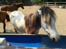 Лошади на ферме Стоковое Изображение RF