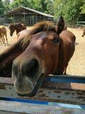 Лошади на ферме Стоковые Фотографии RF