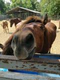 Лошади на ферме Стоковые Фото