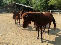 Лошади на ферме Стоковое Фото