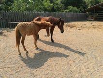 Лошади на ферме Стоковая Фотография RF
