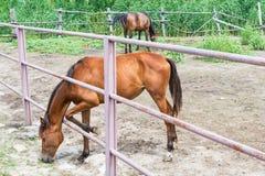 Лошади на ферме Стоковое Изображение