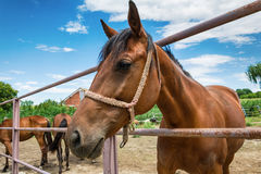 Лошади на ферме Стоковая Фотография