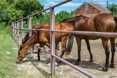 Лошади на ферме Стоковое фото RF