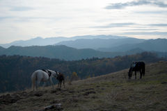 Лошади на холме стоковое фото rf