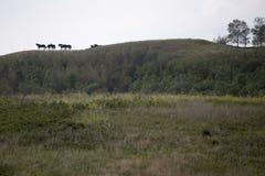 Лошади на Ridge Стоковое Изображение