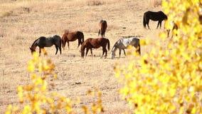 Лошади долины Nicola сток-видео