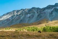 Лошади пасут в предгорьях Стоковое Фото