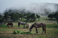 Лошади пасут в лугах в горах, поле, красоте Стоковая Фотография RF