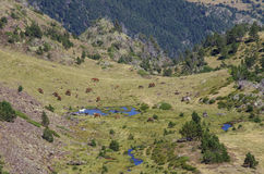 Лошади пасут на луге в долине горы в Пиренеи около комы Стоковое Фото