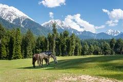 Лошади пася, ландшафт горы Стоковая Фотография