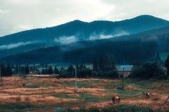 Лошади пася в луге около деревни Стоковое Изображение