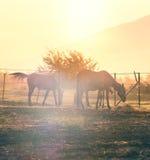 Лошади пася в haras Стоковое Изображение RF