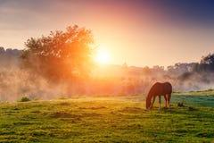 Лошади пася на выгоне Стоковое Фото