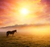 Лошади пася на выгоне Стоковые Фотографии RF