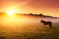 Лошади пася на выгоне Стоковая Фотография RF