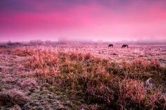 Лошади пася на выгоне Стоковое фото RF