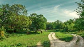 Лошади пася на зеленом луге на солнечный день Стоковые Фотографии RF