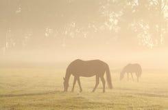 Лошади пася на туманном выгоне Стоковое Изображение RF
