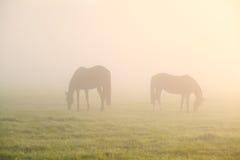 Лошади пася на туманном выгоне Стоковое фото RF